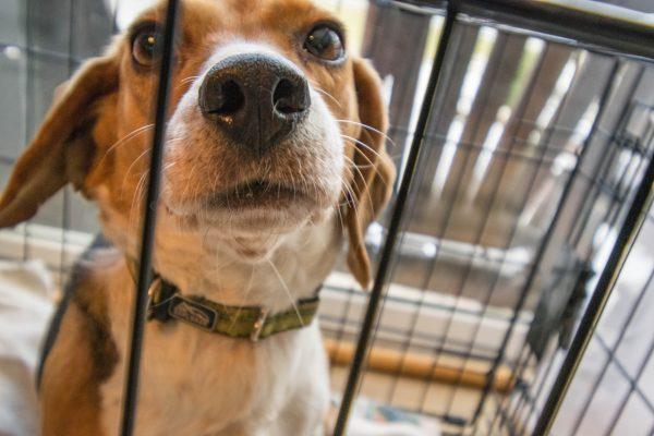 サークルにいる犬の写真