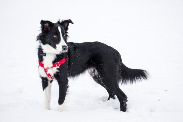 ハーネスを付けた犬の写真