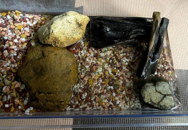サワガニ飼育環境の写真