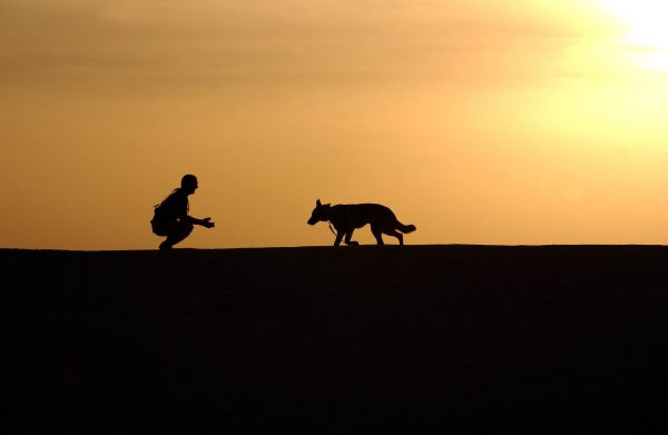 犬の散歩の写真