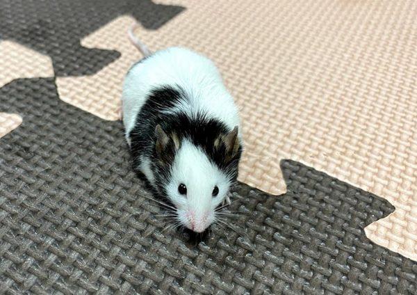 パンダマウスの写真